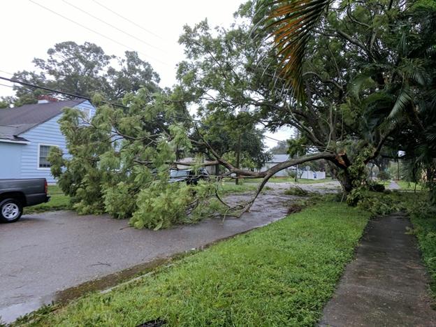 Hurricane_Irma_Downed_Tree
